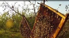 vindeca-i-de-cancer-cu-miere-i-plante